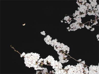04/15月と夜桜