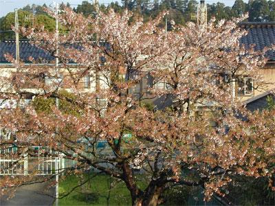 04/22桜の木