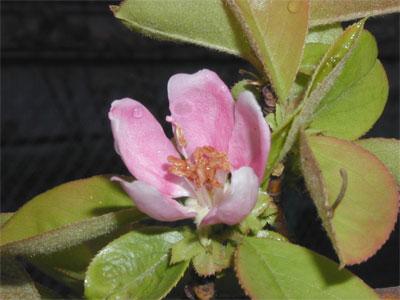 05/02花梨の花#1