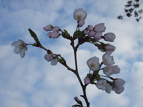 04/18 桜