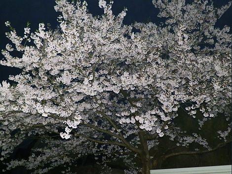 04/24桜 3