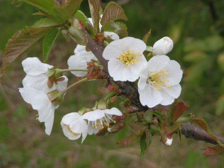 04/18桜-3